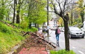 Trunchi masiv prăbuşit pe trotuar