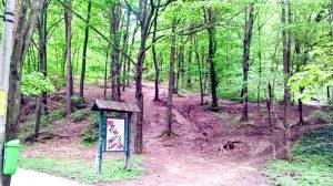 Cum intri pe alee, ai deja trei cărări către inima pădurii