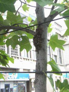 Viespar în staţia de autobuz de la teatru