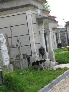 Cimitirul este şi... raiul câinilor fără stăpân