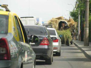 Coloană de maşini în spatele căruţelor