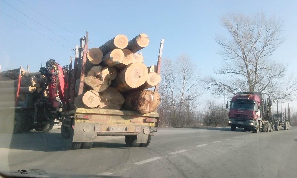 Continuă defrişarea pădurilor. Unul vine gol, altul pleacă plin