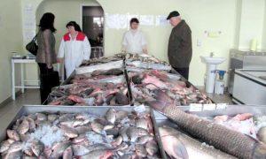 Controale la piaţa de peşte