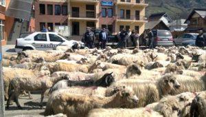 Protest cu turma de oi în faţa Primăriei