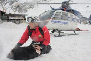 Lege pentru câinii salvatori montani