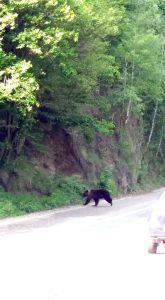 Atenţie! Au reapărut urşii!