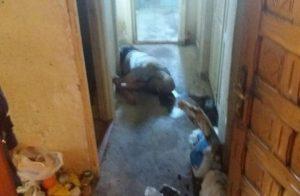 Găsit mort în casă