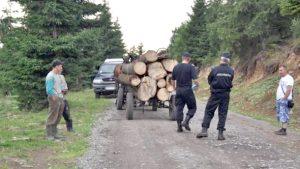Jandarmi atacaţi de hoţi de lemne