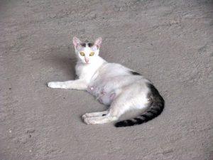 Muncitorilor de la Grădina de vară li s-a arătat pisica