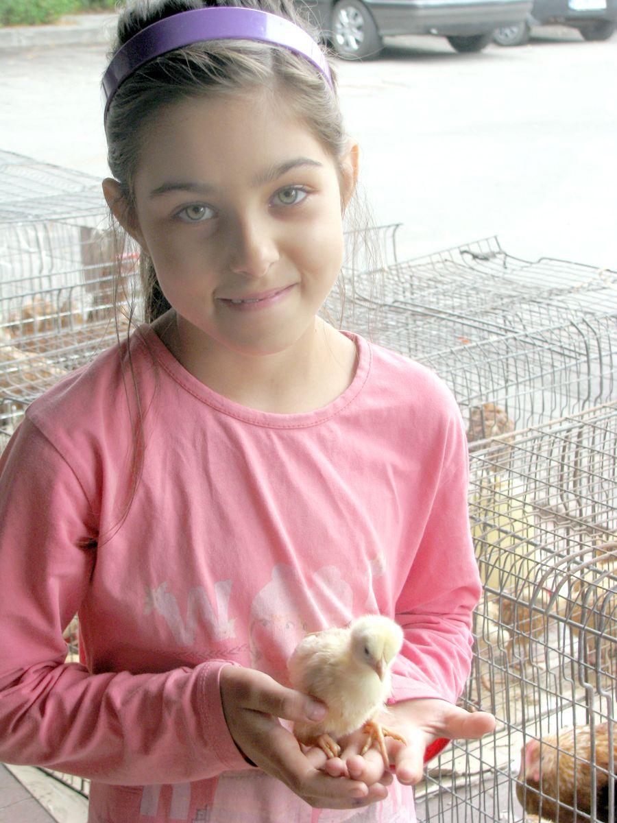 O fetiţă de nouă ani vinde pui de-o zi în Ceair, să-şi ia ghiozdan şi rechizite la toamnă