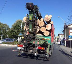 Şi Poliţia Argeş ne comunică - Rămânem fără păduri... legal!