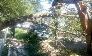 Maşină avariată de un copac la Merişani