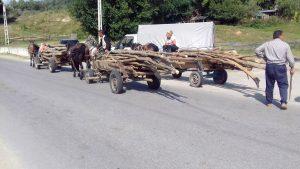 Jandarmii, pe urmele hoţilor de lemne