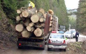 Argeşeni din mafia lemnului trimişi în judecată