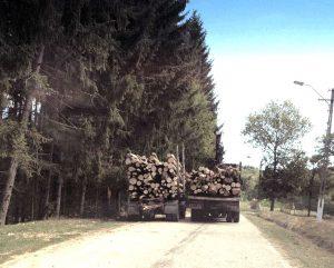 Poliţia de pe Valea Topologului, interesată de jaful din păduri - Alt dosar penal pentru afaceriştii cu buşteni