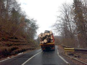 Continuă măcelul în pădurile de la Vidraru!