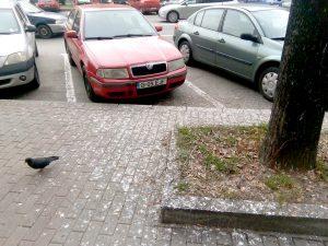 Deranj lângă Policlincă, din cauza ciorilor