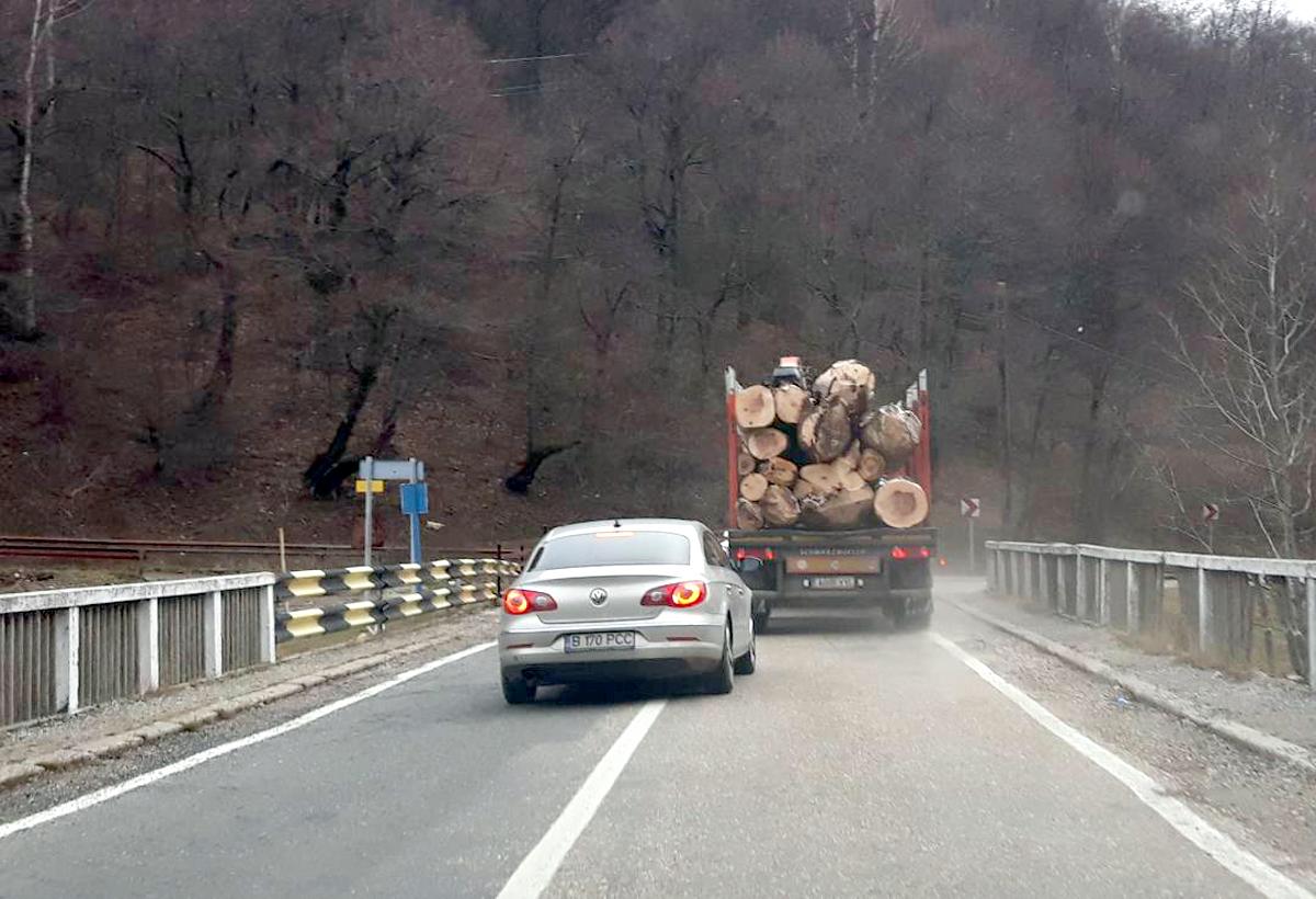 Pădurile sunt tăiate în draci. Dar tot nu e suficient!