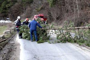 Copaci căzuţi peste case şi pe drumuri