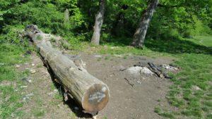 Aşa ceva nu e permis în mijlocul pădurii