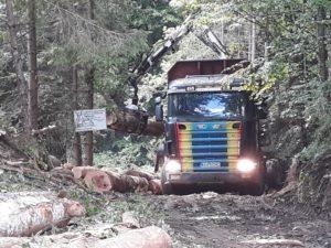 Operatorii din turism se încaieră cu CNAIR, iar pădurile dispar pe Transfăgărăşan!
