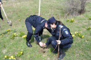 Pe valea Vâlsanului, jandarmii vor planta copaci acolo unde alţii au tăiat