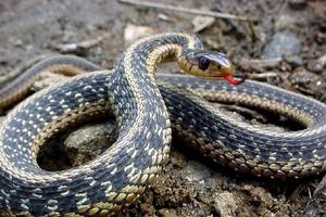 Copil muşcat de şarpe, trimis la Bucureşti
