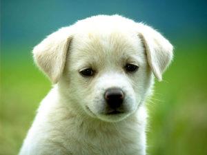 Măsuri speciale de protecţie a animalelor