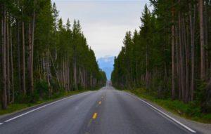 Perdele forestiere pe drumul Piteşti-Slatina